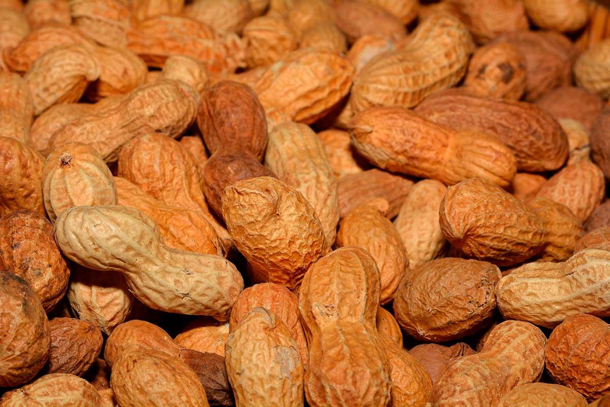 amendoim engorda