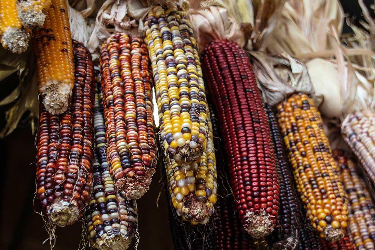 qual a origem do milho
