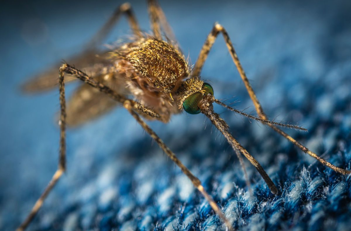 mosquito sintomas da zika