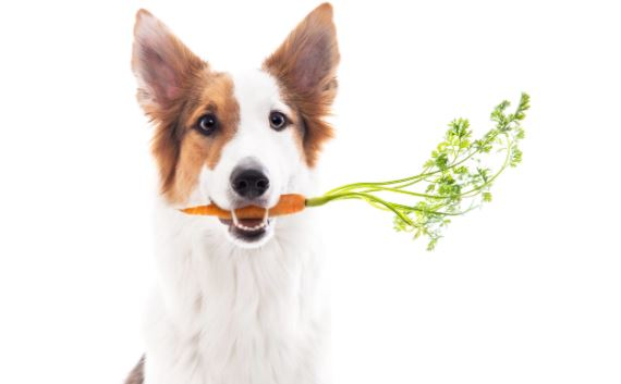 alimentação saudável para pets