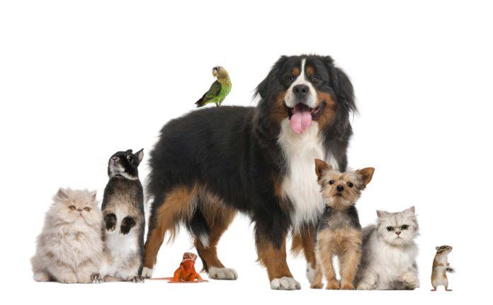Sequestro de pets de estimação